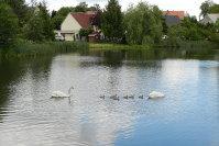 2020_leppersdorf_schwaene_29